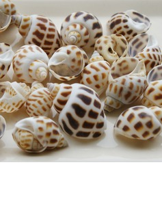 Beach Theme Screw Shells Unique Décor (50 Pieces) (131036845)
